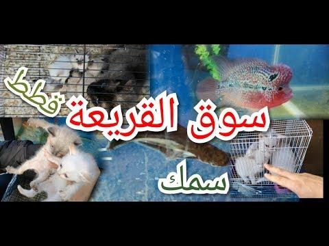 سوق القريعة قطط و أسماك  souk 9ri3a chats et  poissons