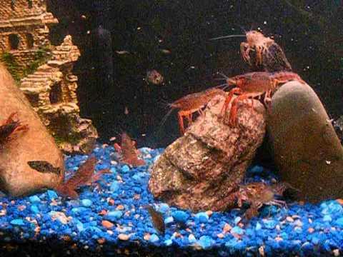 Memilih Ikan Hias untuk Satu Aquarium 2
