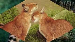 Великолепные  кошки, исчезающих  из   дикой  природы ( часть1)