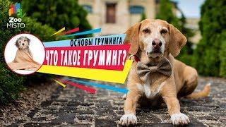 Что такое груминг ? | Груминг собак | Основы груминга с ZooMISTO