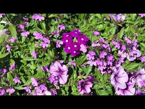 Planting Annuals + Flower Progress!