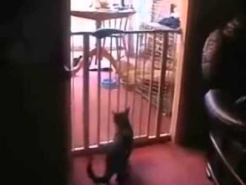 Epic Cat Jump Fail