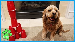 minute-to-win-it-games-for-dogs-logan-the-adventure-dog