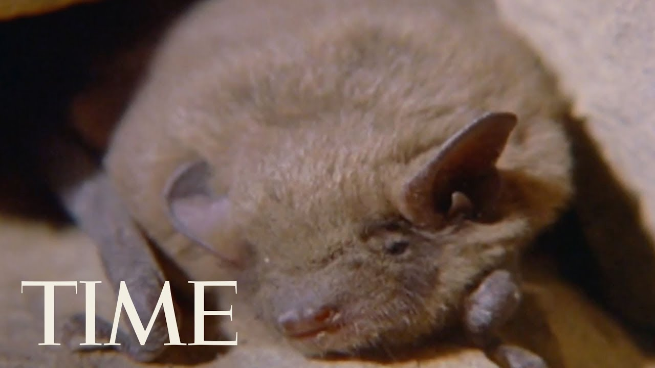 Rabies Alert for Florida City After Infected Bat Found