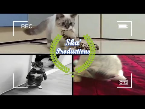 Funny cats Compilation 2017 New! Cats Vines, #1 on Youtube #cat
