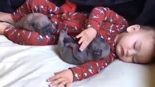 Dogs funny video