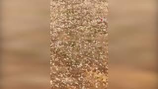 Birecik'te bir çocuk sel sularına kapıldı