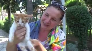 Аланья, Турция: Кошки и Котята в Удивительном Кошкином Парке