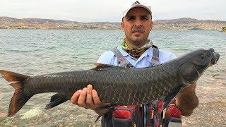 Birecik Barajı Şabut Balığı Avımız