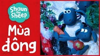 Tổng hợp tập phim mùa đông | Mùa 2 | Những Chú Cừu Thông Minh