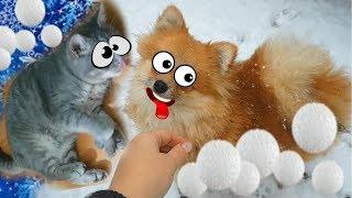 СНЕЖКИ для КОТА МАКСА. Зима глазами щенка Алисы и котенка. Снежный челлендж