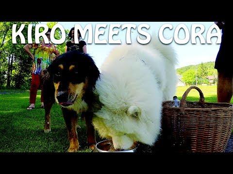 Kiro meets his best Friend Cora
