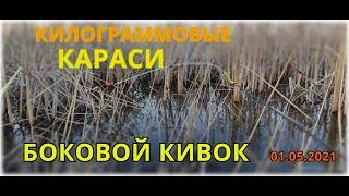 КИЛОГРАММОВЫЕ КАРАСИ на БОКОВОЙ КИВОК рыбалка Северный Казахстан КАРАСИ КАБАНЫ на удочку