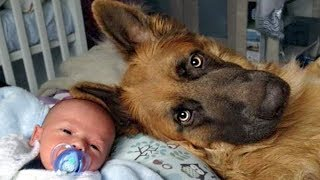 German Shepherd Protects Babies and Kids Compilation