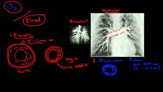 Pulmonary Blood Flow
