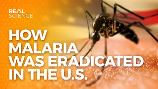 How Malaria Was Eradicated In The U.S.