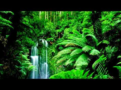 Relaxing Nature Ringtone | Free Ringtones Downloads