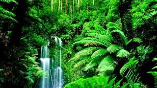 Relaxing Nature Ringtone | Free Ringtones Downloads