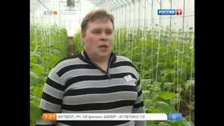 Репортаж о дражжированных семенах в программе Утро России