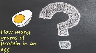 How many grams of protein in an egg?
