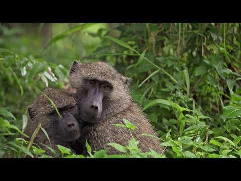Download Arusha National Park 4k - Walking Safari - Tanzania - Africa