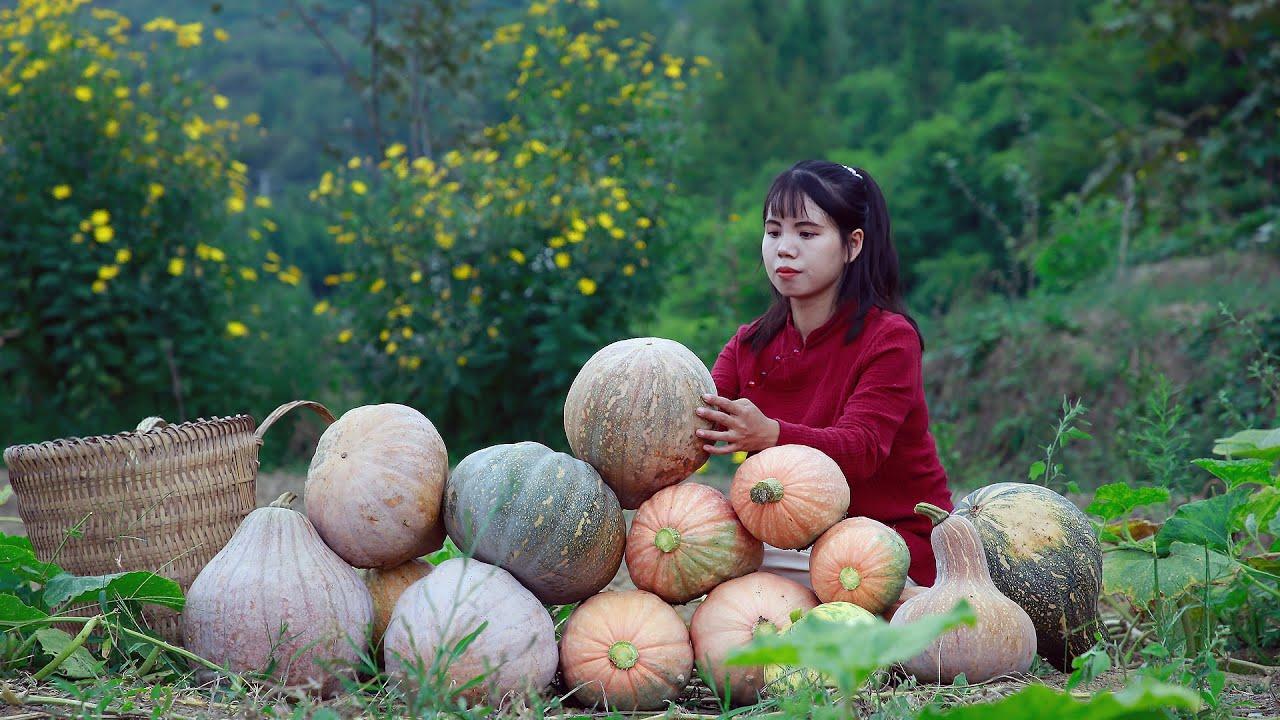 Download I planted a few pumpkin seeds in the spring, today I have a big pumpkin crop春天我種下幾顆南瓜籽,今天收穫一堆大南瓜