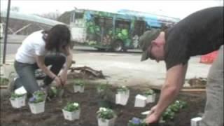 Guerilla Gardening on Capitol Hill (DC) - 3/9/09