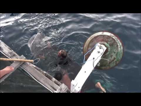 Rajeev Saumitra Play With Whale Shark under 'Pacific Ocean'.