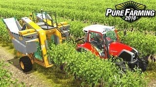 Zbiór winogron - Pure Farming 2018   #38