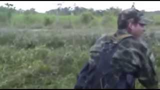 Combate Las Farc En Corinto Pan De Azucar