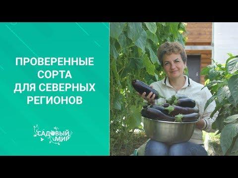Проверенные сорта томатов и огурцов для северных регионов