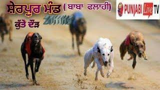 [Live]Sherpur Mand {Baba flahi} Dog race 20 Nov 2019