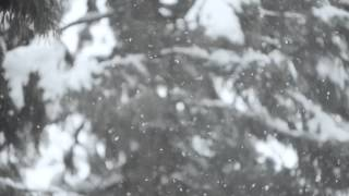 österreich - 『無能』MV (Tokyo Ghoul OP Theme song)