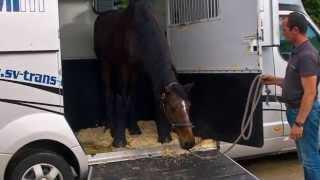 SV TRANS - Transport de chevaux France et Europe