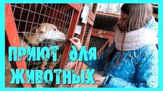 #zelmgpu - Приют для животных