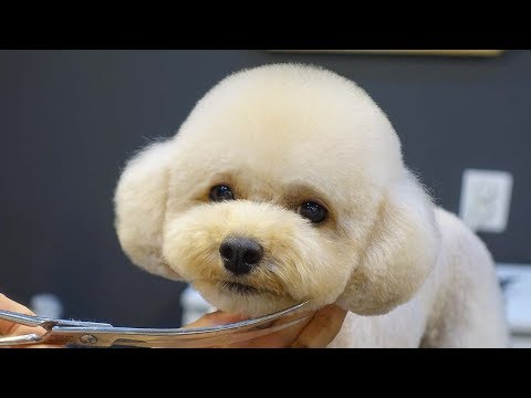 Will transform into Teddy Bear