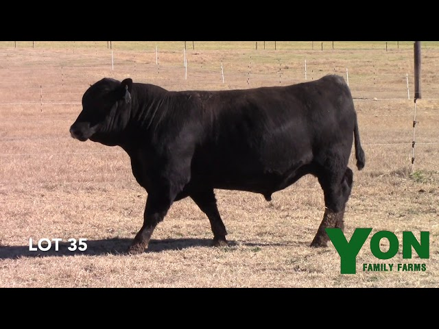 Yon Family Farms Lot 35