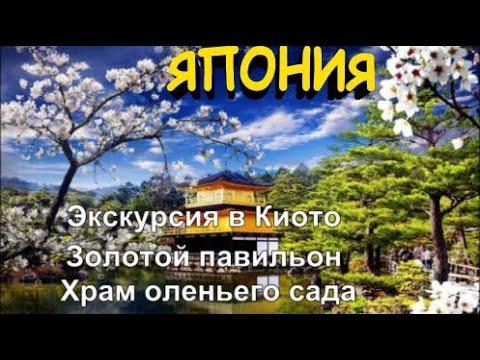 Япония 2020 Экскурсия в Киото Фудзияма Кинкакудзи Золотой павильон Рокуон-дзи Храм оленьего сада ч.1