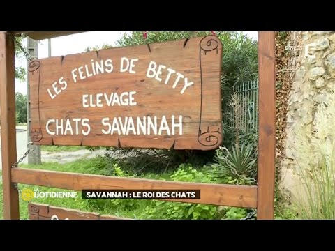 Les Savannah De Betty