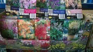 Цветы Семена Луковичные цветы Обзор Магазин Лидл Lidl