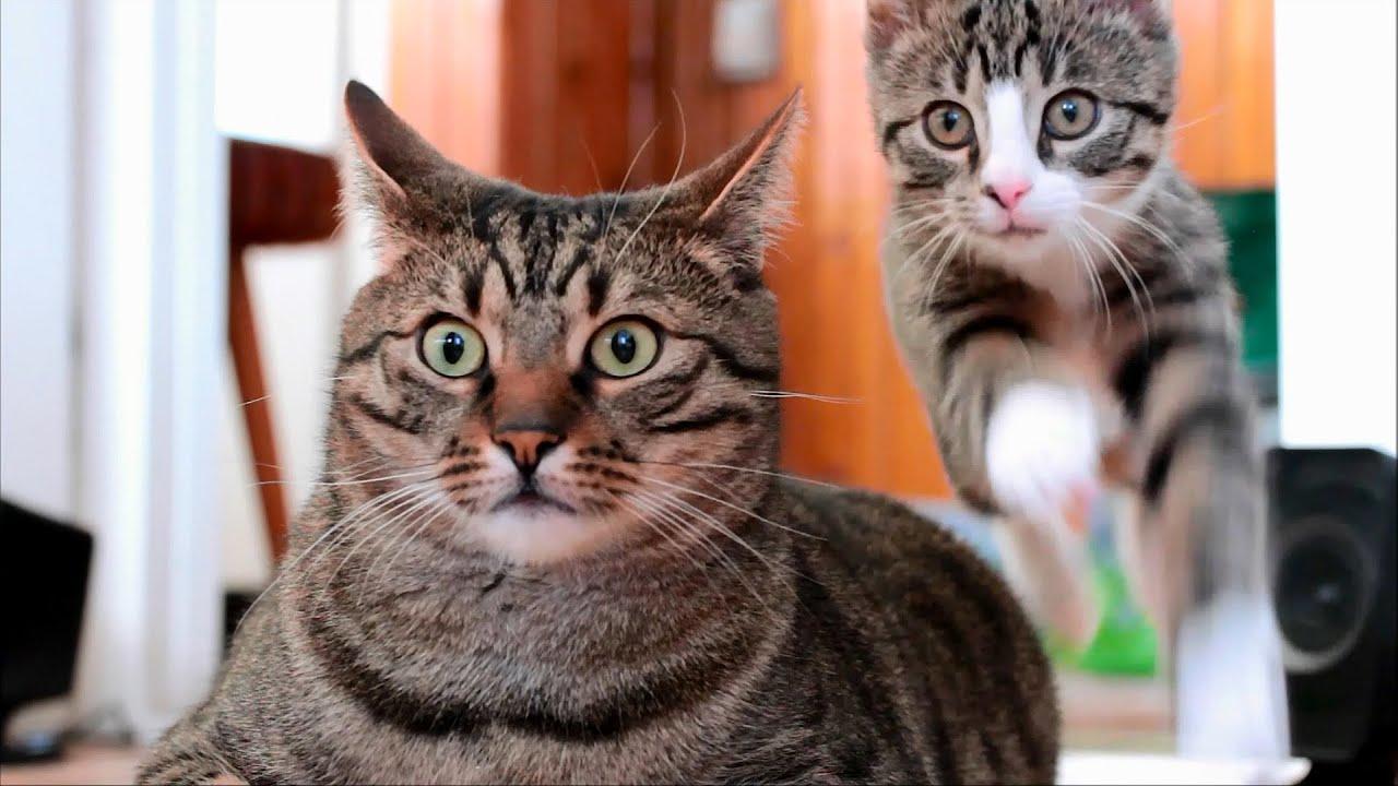 Awesome Cats Bobo & Nikita
