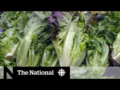 CBC News: The National: Avoid romaine lettuce amid E. coli outbreak, health officials warn