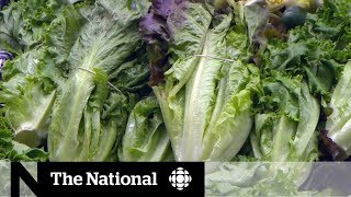 Avoid romaine lettuce amid E. coli outbreak, health officials warn