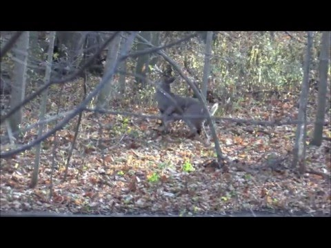 Gut Shot Whitetail Bowhunting