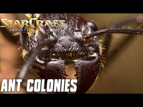 Ant Colonies - Being the Ant God - Starcraft 2 Mod