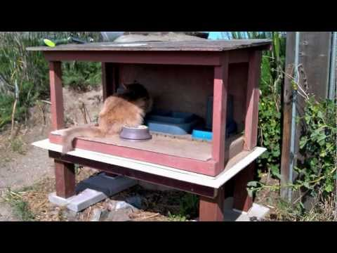 Gentil How To Skunk Proof A Feral Cat Feeding Station