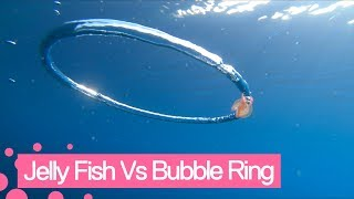 Jellyfish goes for a spin after wrapping itself around bubble ring.