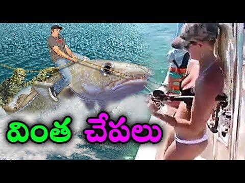 ప్రపంచంలో 10 వింత చేపలు    Mysterious Water Creatures Caught While Fishing in Telugu    T Talks