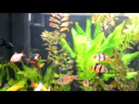 Аквариум на 120литров.С рыбками и живыми растениями.