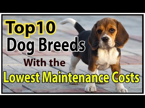 10 Dog Breeds With the Lowest Maintenance Costs 2016 ♦ dogs 101 ♦ dog health tips